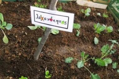 Ο λαχανόκηπός μας τον Σεπτέμβριο!